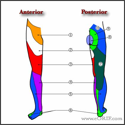 Lower extremity Cutaneous Innervation