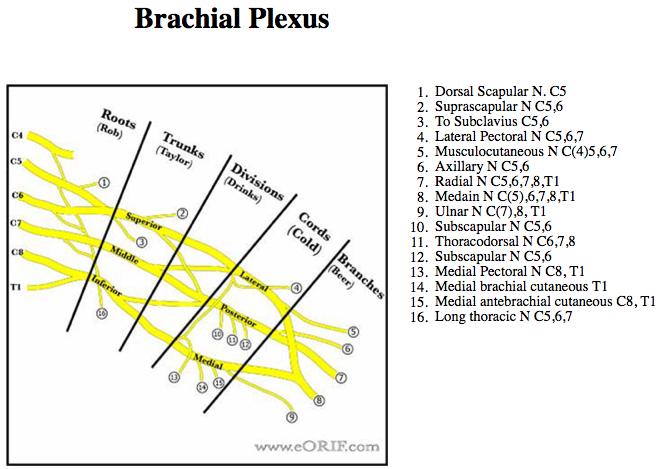 Brachial Plexus Palsy G54.0 353.0 | eORIF